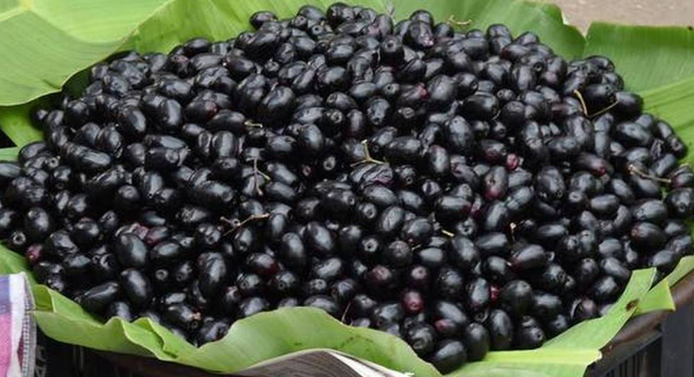 Benefits Of Jamun In Hindi
